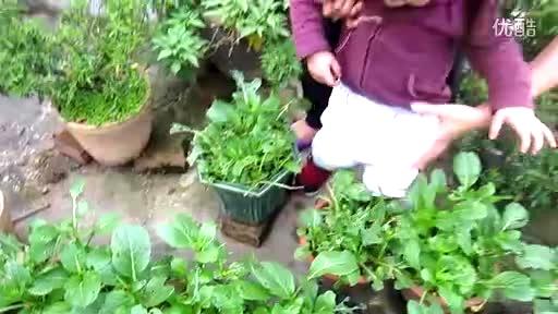 2岁半三楼自己尿尿捉菜虫 20120403-三农视频-搜狐视频