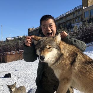 我在新疆养狼