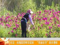 """牟定:玫瑰园里鲜花绽放 """"美丽经济""""助农增收_云南楚雄网"""