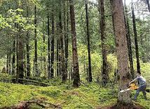 植树造林,让绿色生生不息
