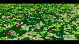 《美丽的邂逅湖》演唱苏勒亚其其格