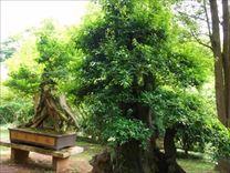贵州行--黄果树大瀑布风景区<完整版>