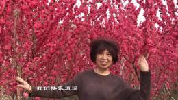 春天我们去看花(流苏演唱版)