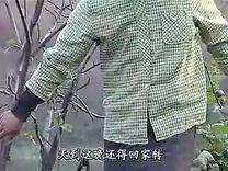民间小调( 生养孩子才知报娘恩)2