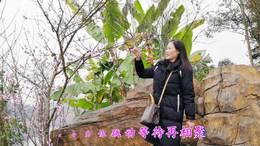 2019年3月12日重庆长寿湖旅游