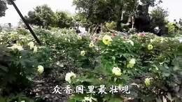 《枫林苑创建四周年》风采录