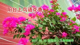 阳台上鸟语花香