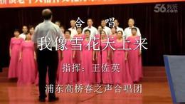 2 16 6 28【我像雪花天上来】浦东高桥春之声合唱团指挥:王佐英