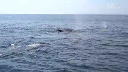 波士顿出海观赏鲸鱼1