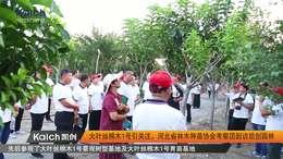 大叶丝棉木1号引关注,河北省林木种苗协会考察团到访凯创园林