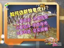 全城起筷 海胆酱焗澳洲虎虾_ 全城起筷 _视频在线_广东电视网
