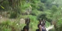 三六班同学 白崖寨音乐版视频