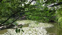 MAH00574杜鹃园 3园区花景杜鹃园九段录像