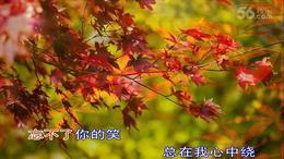 枫叶飘飘视频暖