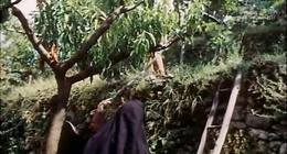 """帕索里尼导演著名电影""""十日谈"""" 中英字幕(TB7001)"""