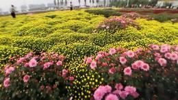 感受秋日—醉美菊花展 10月17日来到位于秦岭北麓的祖庵 。