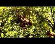 鸡足山观猴(4分20秒)