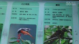 長广溪鸟类