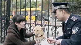 【一部关于中华田园犬的公益微电影】《流浪三十三天》...