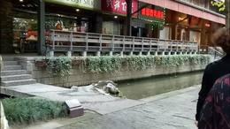 杭州西湖走走