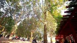深秋的油田新蕾公园