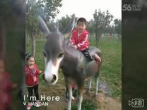 XiaoYing_Video_1481111003897