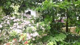 MAH00583杜鹃园 8花景道路 1 杜鹃园九段录像