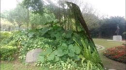 春游南宁:去南湖欣赏亚热带植物