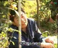 庐剧《二百五发财记》 电视版 主演: 王玉才、昂小红、吴南野