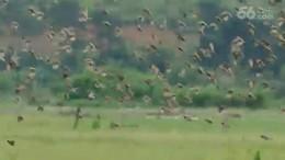 斑文鸟的乐园