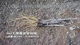 818 干旱图片视频 环境破坏恶化 土地沙化 保护环境主题素材...