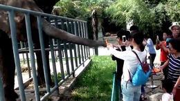 (366)第15集:秦岭动物园 下集2016陕西风光系列片(1:5)