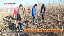 凯创园林大叶丝棉木精细化管理,增加优质苗木出苗率