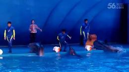 海豚表演  横店影视城