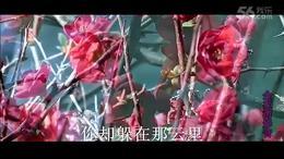 对着月亮说爱你 团风依依(湖畔红梅风景)超清KTV...