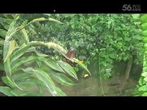 七色彩蝶3