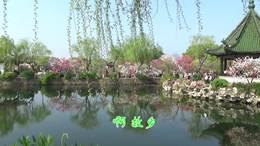 在那桃花盛开的地方——无锡蠡园桃花节掠影