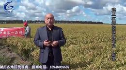 小黑龙缓控生态肥抗台风电视台宣传