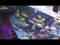 潘沐柠参观太平洋海底世界
