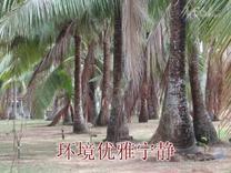 海南之旅(四)椰子大观园