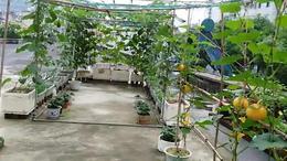 阳台上的植物