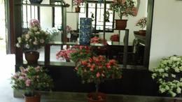 MAH00573杜鹃园 2廊厅花展杜鹃园九段录像