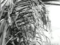 电影《枯木逢春》插曲  毛主席像红太阳