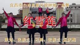 红雪莲 宜昌市白洋滚钟坡广场舞 习舞:张振兰 孟庆梅