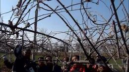 05果树专家赵志修老师猕猴桃一杆两蔓修剪讲课