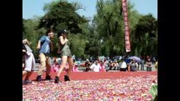 世纪广场  长春舞蹈团演出的 欢快集体舞