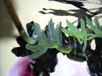 当代实力派国画家一丁画牡丹 金安传媒