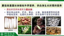 mushroommarket 1