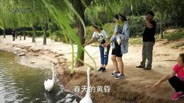 《梦里水乡》     鹅城广平美景如画,约你一起看天鹅!