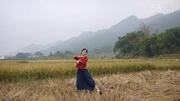 彩云之南(肇庆牌坊广场老师示范版老画眉自拍)2